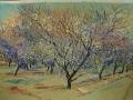 Almond orchard