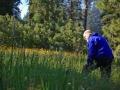 Quaking Aspen Wildflowers